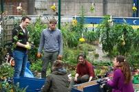 Volunteers in the Kyle St garden