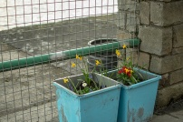 Plant boxes on St Patrick's Quay