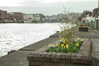 Flower beds on St Patrick's Quay